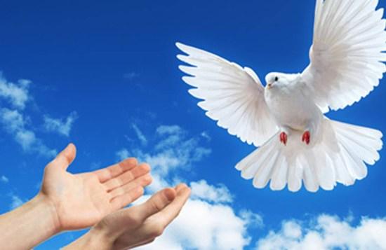 1 de Enero Día Mundial de la Paz