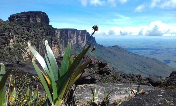 Canaima and Tepuyes - Venezuela and its benefits