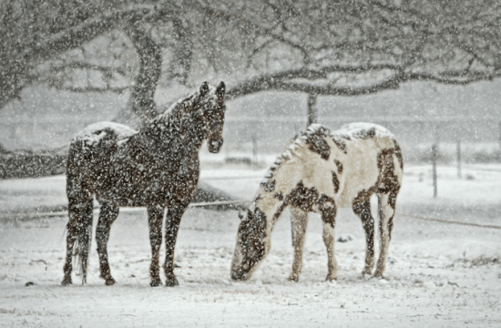 Caring for the horse in winter - Gustavo Mirabal Castro
