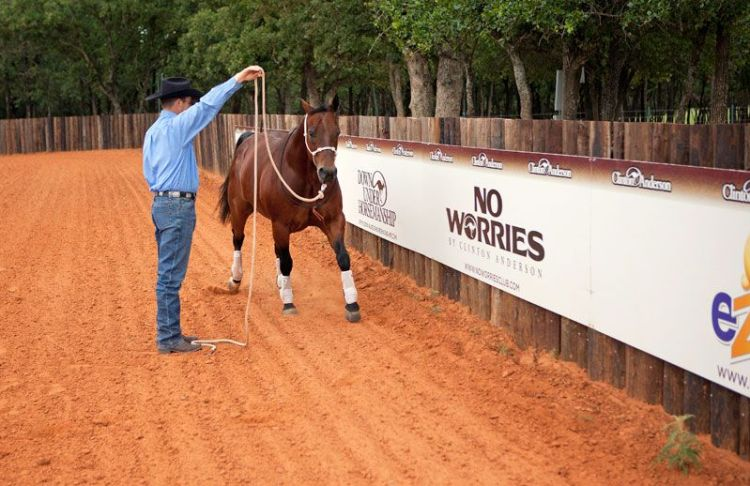This exercise will help your horse become less nervous in tight spaces.