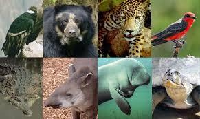 Fauna de Venezuela