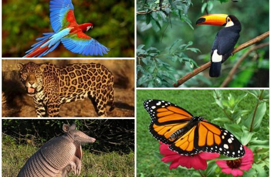 Gran diversidad de Fauna de Venezuela