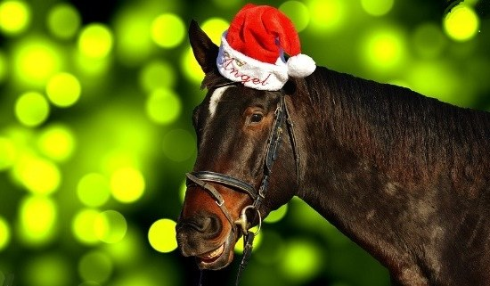 Horse with Christmas hat - Equestrian gifts for Christmas