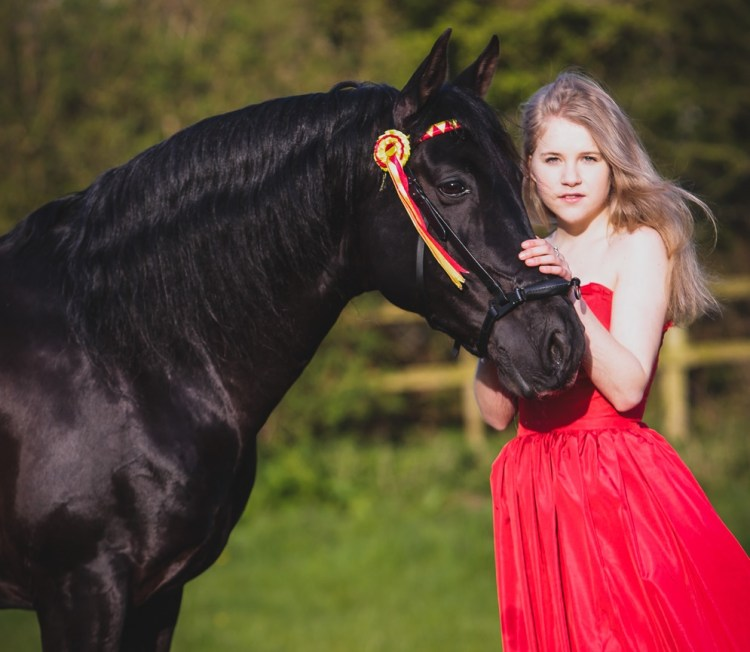 Pure Blood Lusitano - A Ciara Doone Rush Photography (https://doonerush.co.uk/hero-the-pen-llyn-lusitanos)