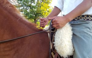 Tips to learn how to ride and Essentials of equestrian safety