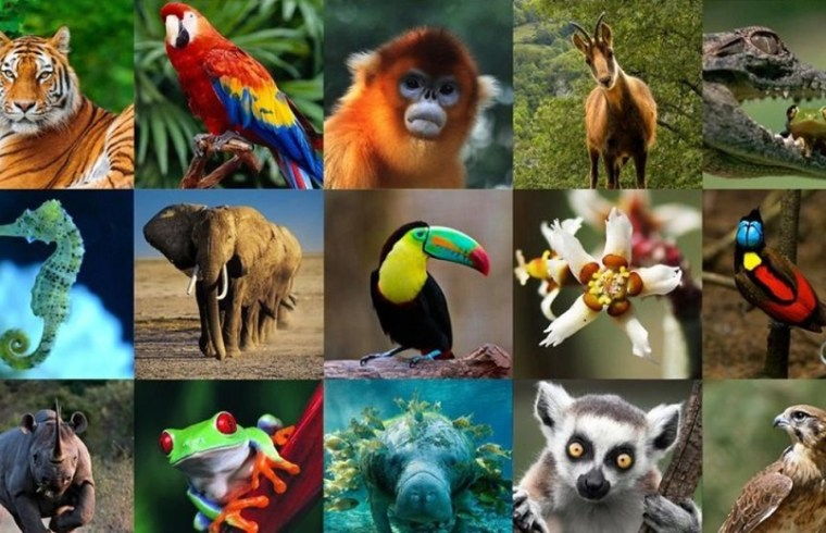 Wildlife of Venezuela