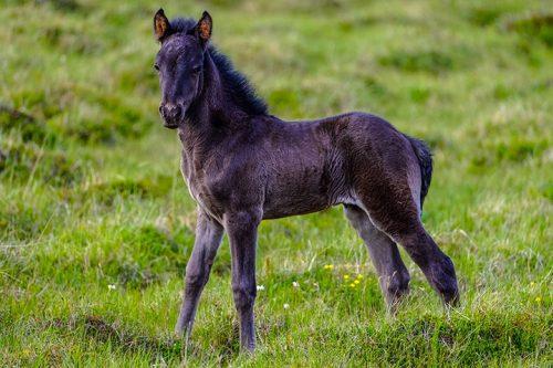 Outdoor foal