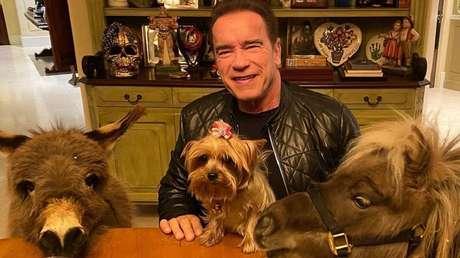 Arnold Schwarzenneger y sus mascotas equinas