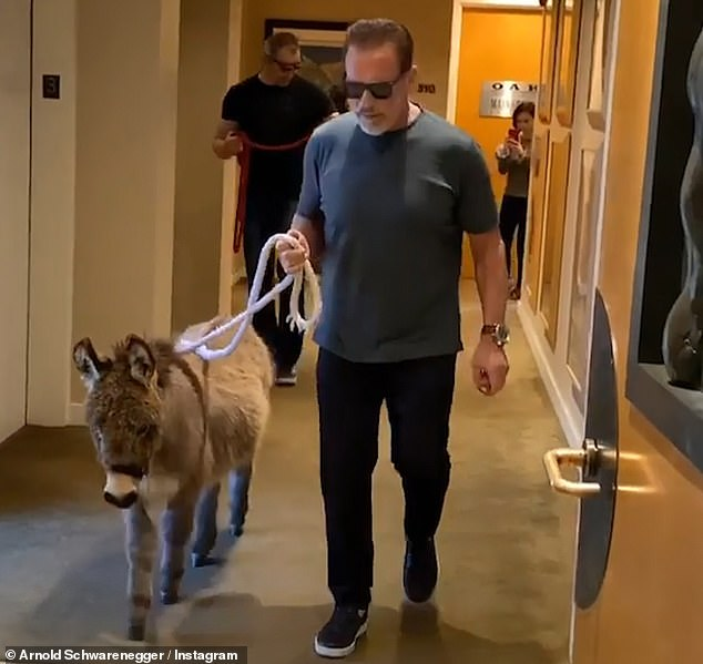 Arnold Schwarzenegger and his new pet a mini donkey
