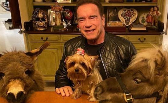 Arnold Schwarzenegger and his pets in quarentine