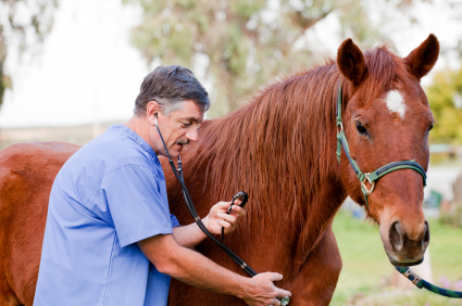Equine Veterinary Examining - Horse care in coronavirus quarantine