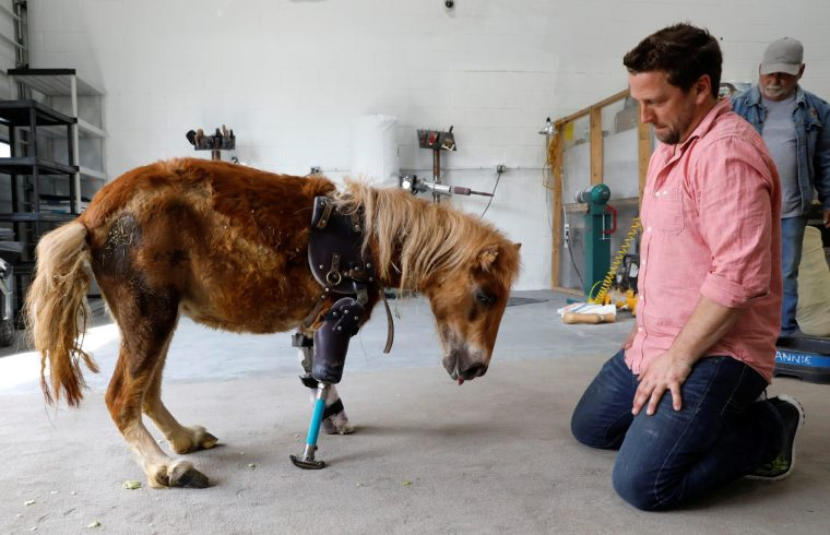 Prosthetics for horses