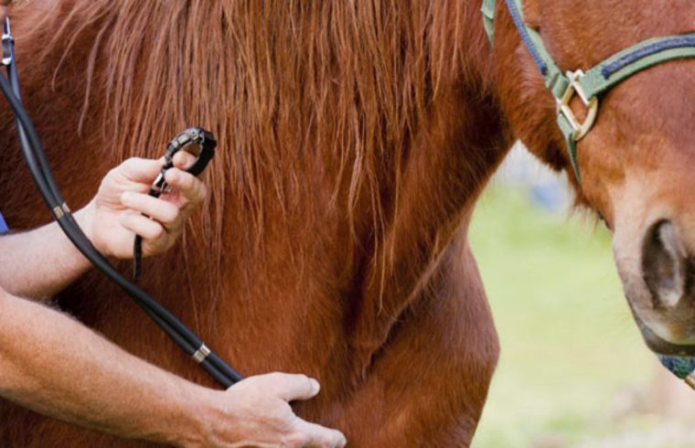 Cuidados de los caballos en cuarentena