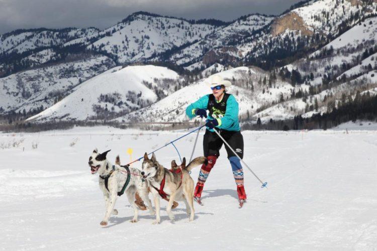 Entrenamiento de Skijoring con perros