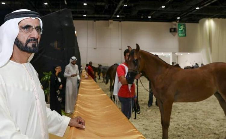 Dubai: Synonymous with equine passion – United Arab Emirates