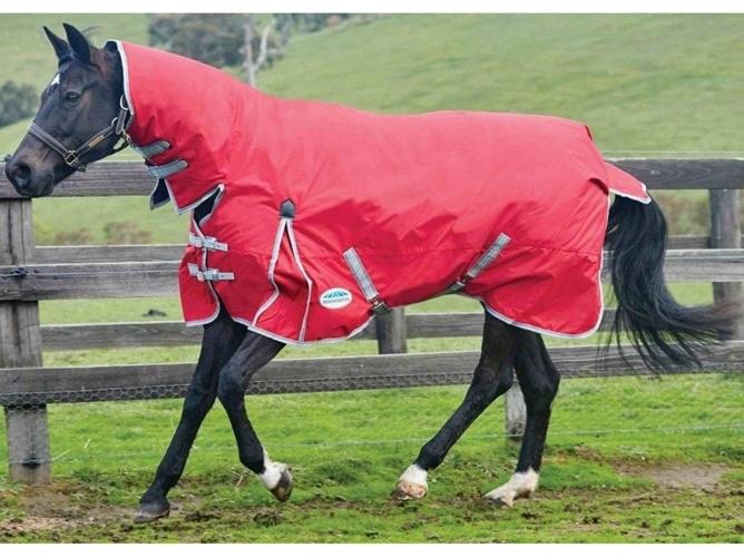 Estudio de manta o sin manta de los caballos - Inteligencia Equina