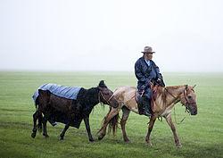 El caballo en Mongolia