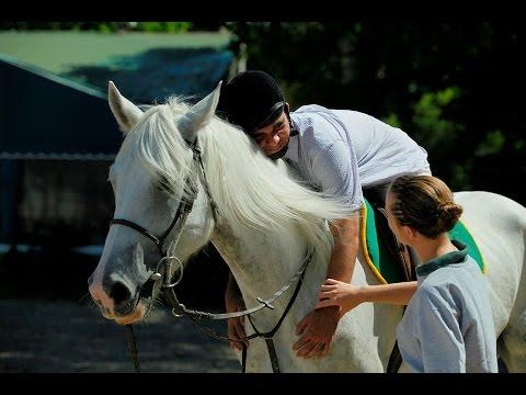 Horses are smart aminals