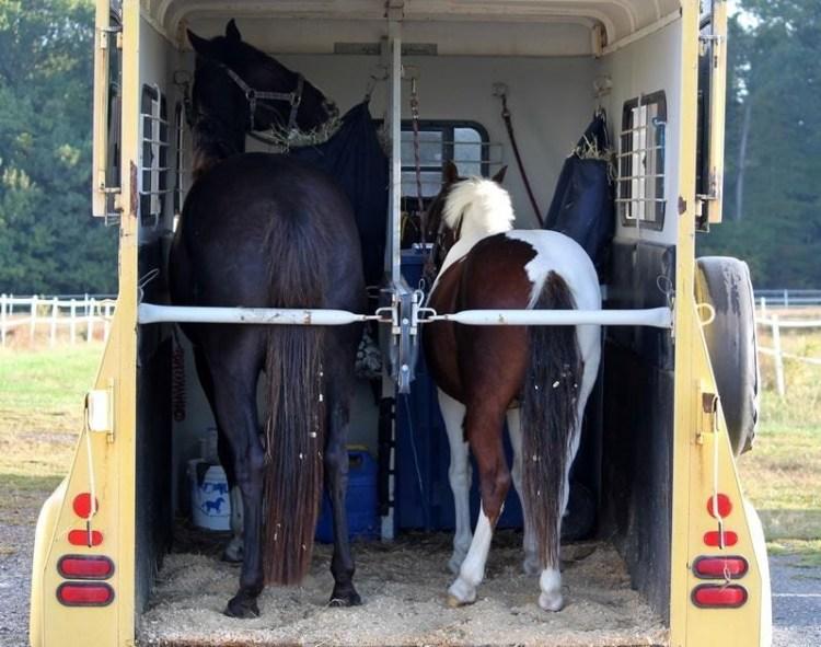 caballo viajero