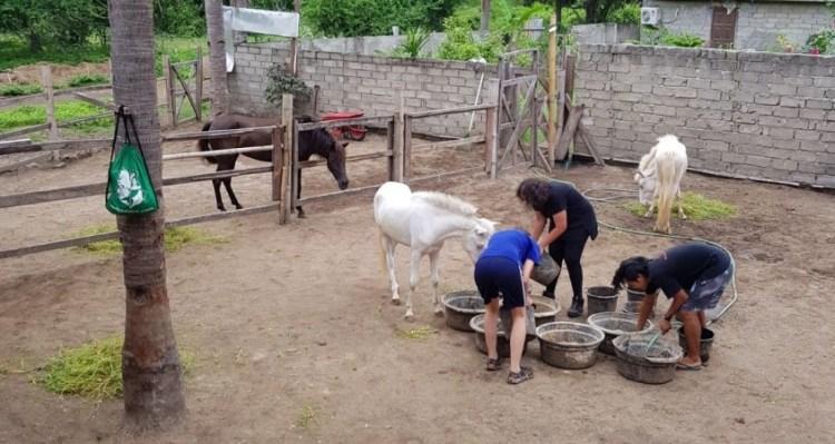 Gili Horses and equestrian volunteering