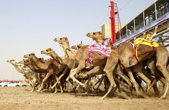 Dubai: Camels and Races