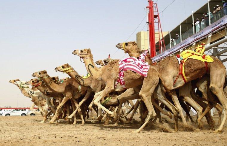 Dubai: Camels and Races