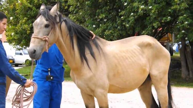 Horse Adoption