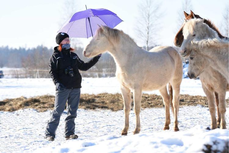 Estonian horse