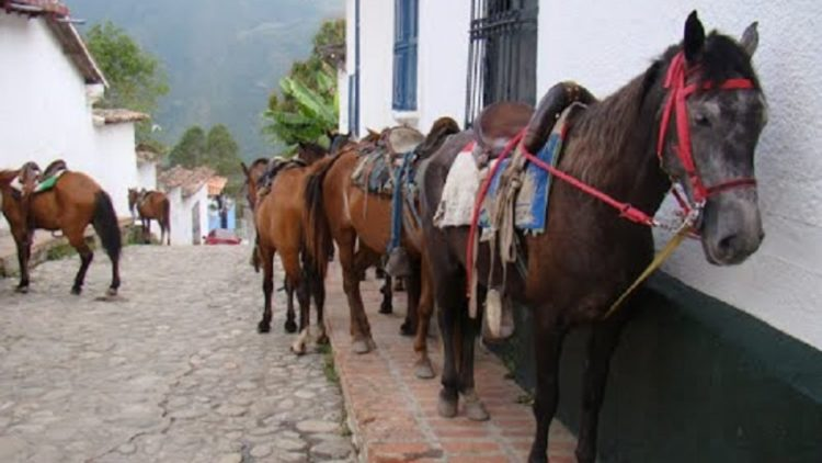 The Jají and it horses