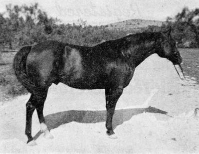 Silver King - El padre de Tornado el caballo del Zorro