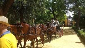 Una nuestra de la tradición ecuestre de Jerez de la Frontera