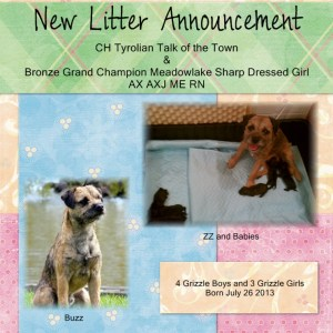 ZZ & Buzz Litter Announcement