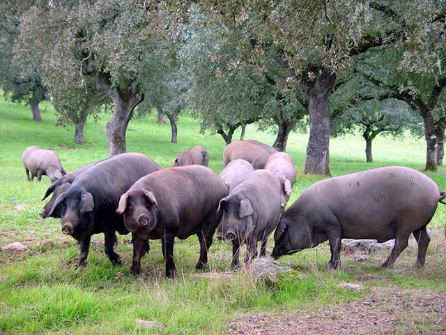 Cerdo Ibérico vía Oido del Chef
