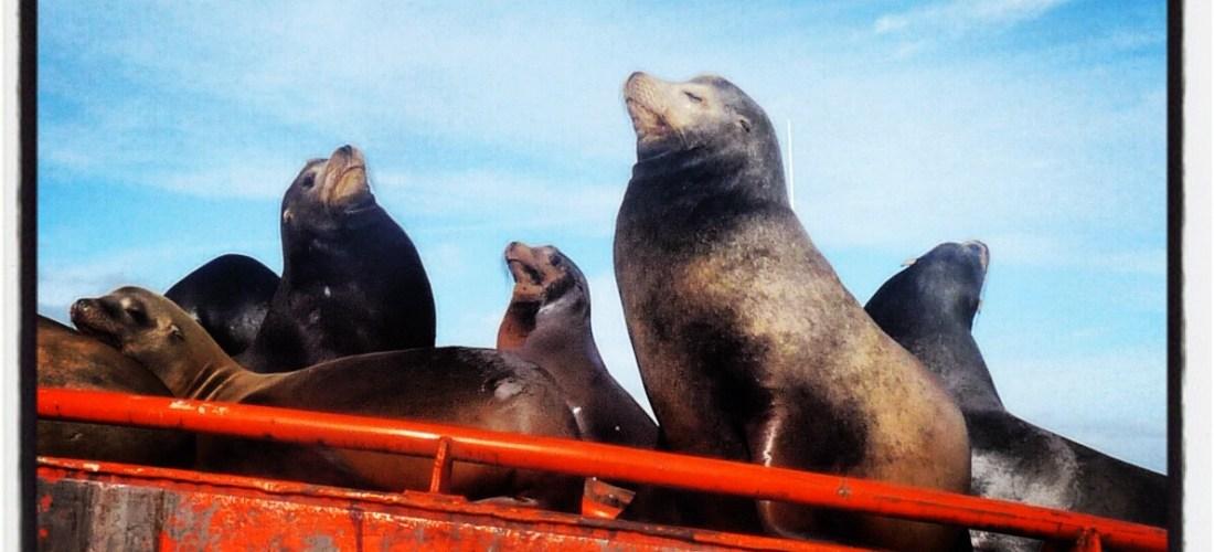 """#México a través de la lente """"Lobos marinos, Laguna Ojo de Liebre en BCS"""" @marioli_5"""