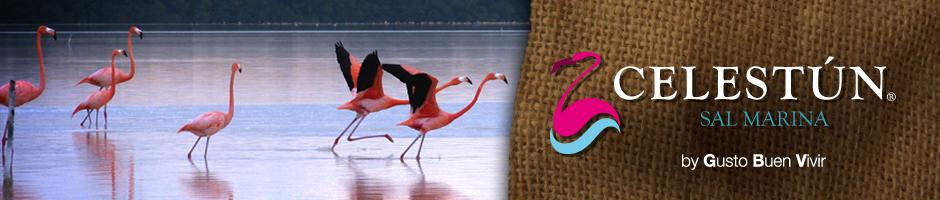 """En video todo sobre """"El Flamenco Rosado"""" Celestún Yucatán @SalCelestun"""
