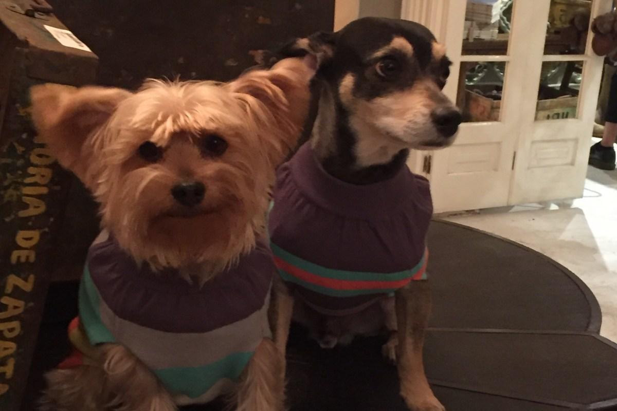 Lanzamiento de Zató Pets #LookAlikeZatóPet