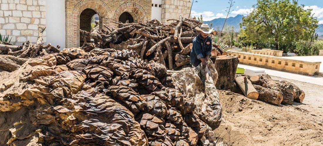 @mezcaloro ¿Por qué es Oaxaca el estado en donde se produce más mezcal en México?