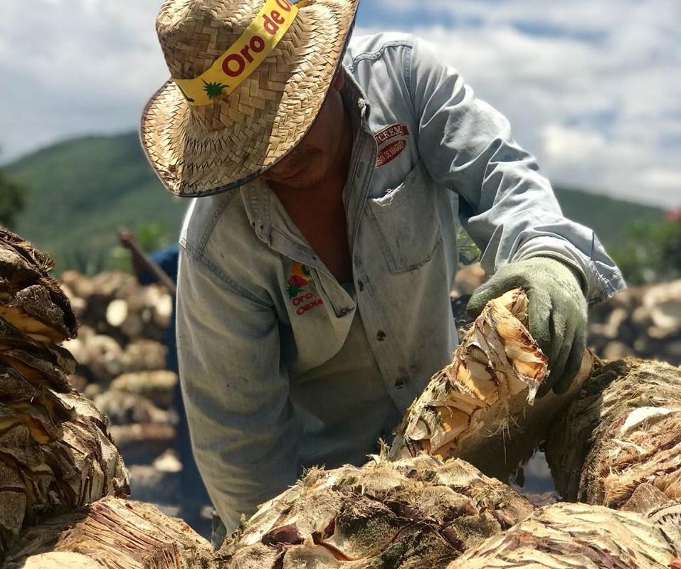@mezcaloro Oaxaca, el estado con Denominación de Origen, que produce el 85% del mezcal en todo México