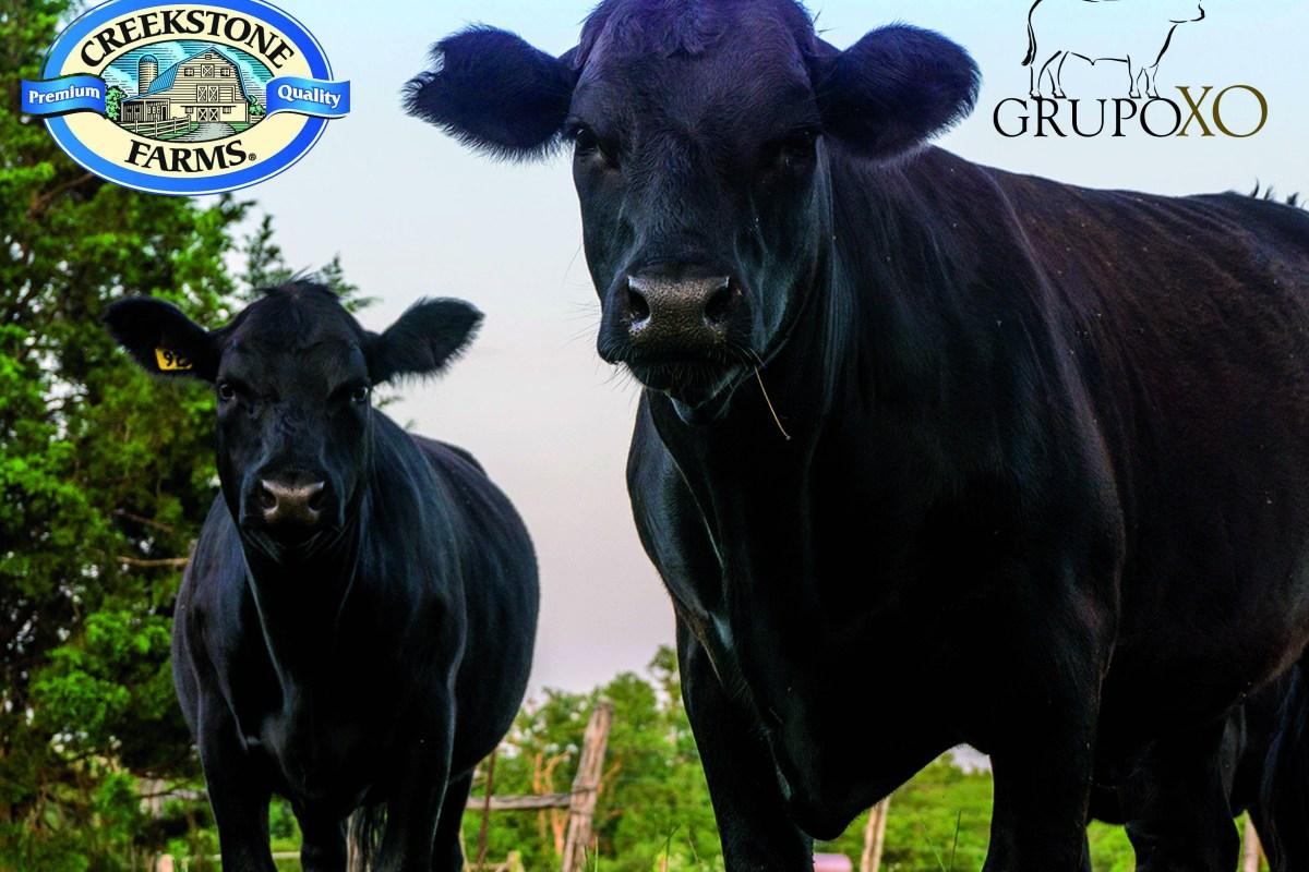 Grupo XO anunció que será el distribuidor de la marca Creekstone Farms, productora de carne de res 100% Black Angus, la cual se distingue por su inigualable marmolejo, calidad y sabor excepcional.