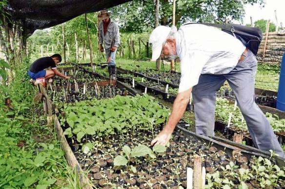 Cultivos colombianos, cortesía de eluniversal.com.co