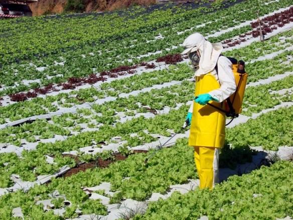 Cultivador fumigando (Cortesía: elciudadano.cl)