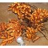 Australian grown turmeric
