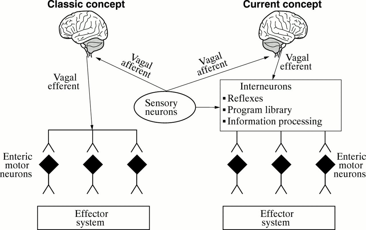 Fundamentals Of Neurogastroenterology