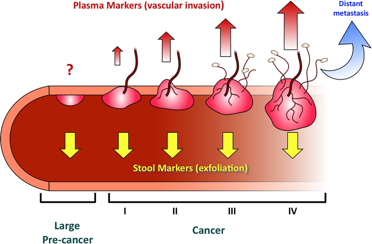 Molecular Markers For Colorectal Cancer Screening