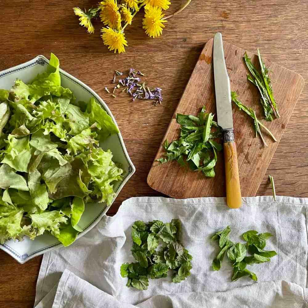 Den Salat in einer Schüssel geben und mit den Wildkräutern anrichten.