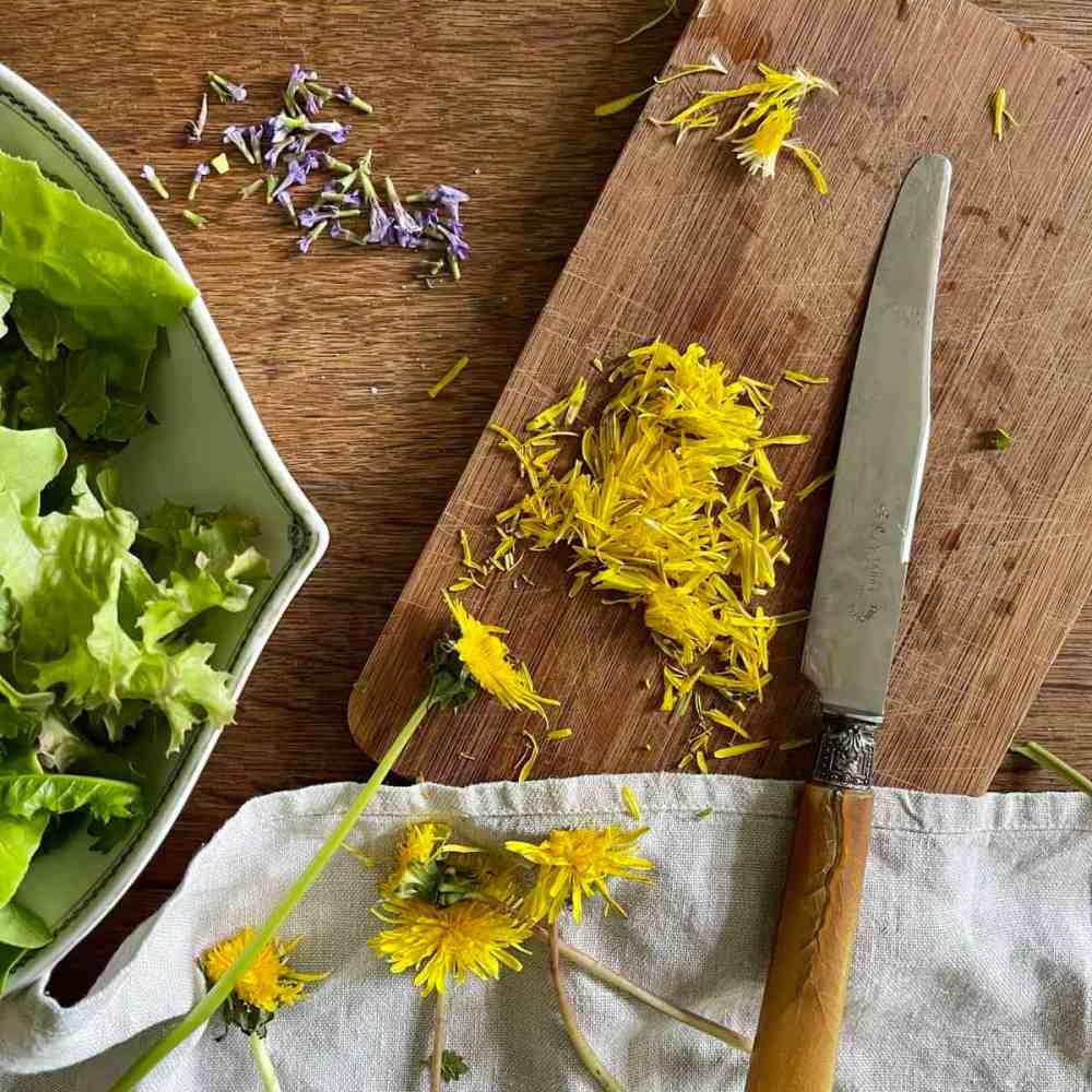Die Blüten des Löwenzahns mit einem Messer kurz vor dem Anzatz schneiden.