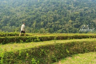Inmitten von brachliegenden Reisfeldern