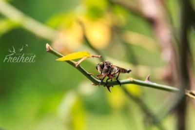 Libelle oder Käfer?
