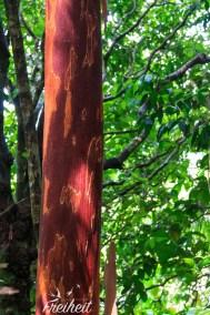 Zwischen dem Grün wächst auch rot :)