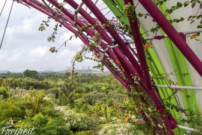 Alle 18 Giant Trees zusammen beherbergen über 160.000 Pflanzen